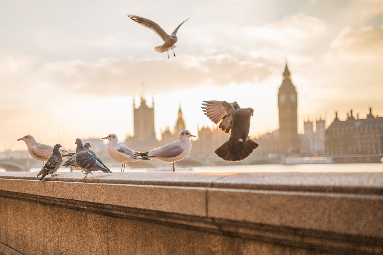 Attract Birds to Your Garden and Enjoy Bird-Watching for Mental Health